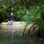 Le kayak dans la mangrove de bord de mer.jpg